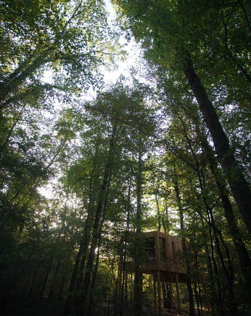 Hébergement dans les arbres